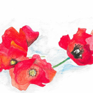 First World War Poppy artwork project brings together people living with mental health problems and the local community