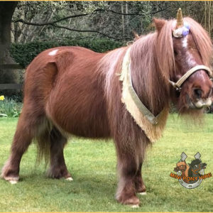Therapy pony nominated for national award