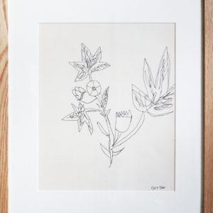 Black pen illustration of cotton plant