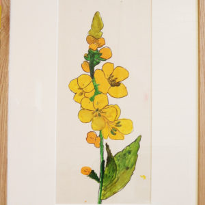 Yellow spike flower, acrylic paint on paper