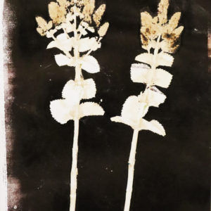 Ink/sepia and white flower print