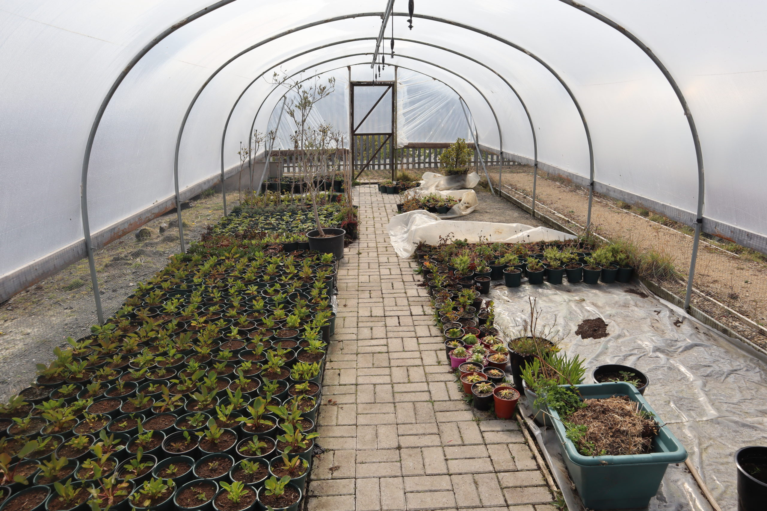 One of the polytunnels at Hopewood Park used by the Occupational Therapy team to grow plants with patients.