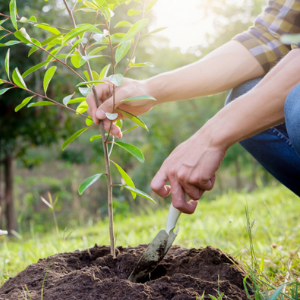 Capturing carbon, promoting wellbeing: CNTW to plant 1000 trees